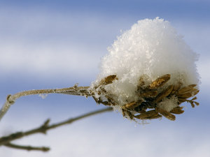 snowconebythaumadzo.jpg